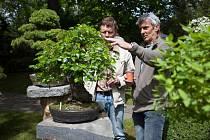Výstava bonsají v pražské botanické zahradě.