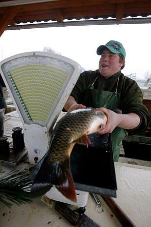 PRVNÍ VÁNOČNÍ KAPŘI. Do Prahy dorazilo na dvanáct tun ryb z jihočeských rybníků v okolí Třeboně.
