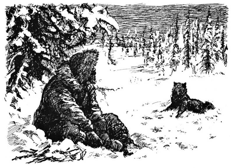 Krumova ilustrace knihy Jacka Londona Volání divočiny.