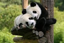 Pandy.