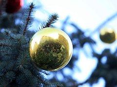 Vánoční strom. Ilustrační foto.