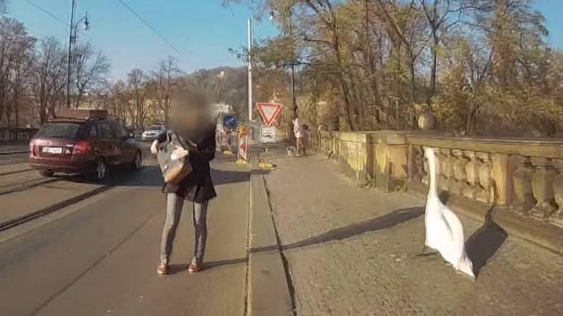 Labuť se vydala na procházku po mostě Legií, strážníci ji vrátili dolů k vodě.
