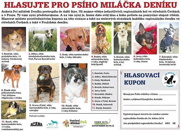 Psí miláček Deníku 2016 - finalisté krajského kola pro Prahu a střední Čechy.