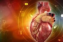 Anatomický model lidského srdce. Ilustrační foto.