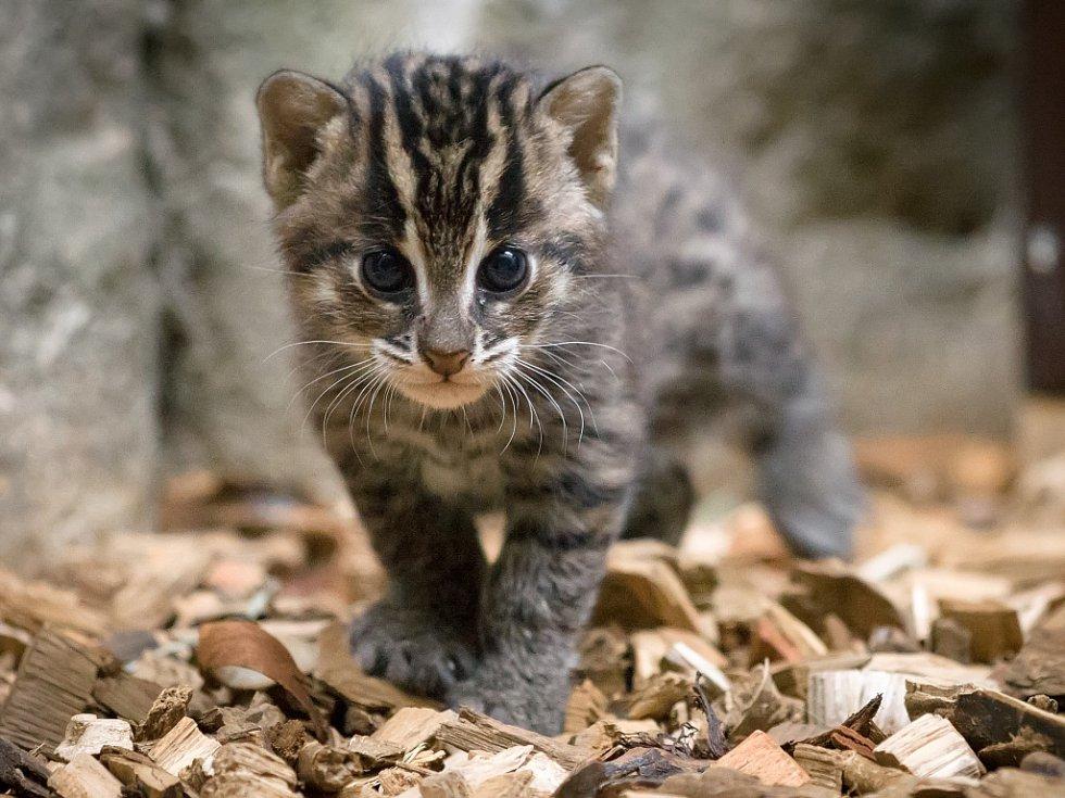 Mladé kočky