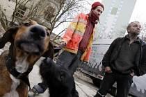 PSI UTEKLI PŔI VENČENÍ. 25.2. 2008 v pondělí v noci roztrhali dva psi v pražské ZOO třináct zvířat. Na fotografii jsou oba majitelé psů Štěpán Mareček (v oranžové bundě) a Dick (v černém oblečení) se psem Leonem, jedním ze dvou pachatelů.
