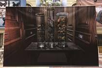 Národní muzeum nabízí spoustu svých výstav online. Snímek z výstavy Přírodovědecké sbírky ve fotografiích.