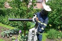 Sršní roje musejí hasiči vysát speciálním vysavačem a poté jej odvezou mimo město, kde včely vypustí.