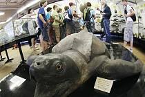 V Národním muzeu v Praze se 7. června konalo před rekonstrukcí symbolické loučení s přírodovědeckými expozicemi.