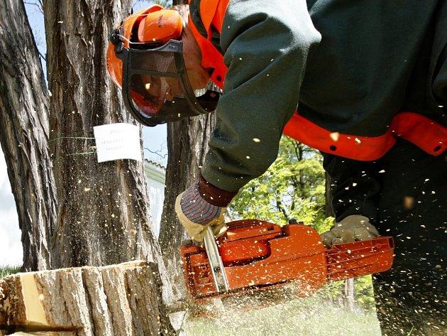 Staré dřeviny musí ustoupit novým a zdravým. Ilustrační foto.