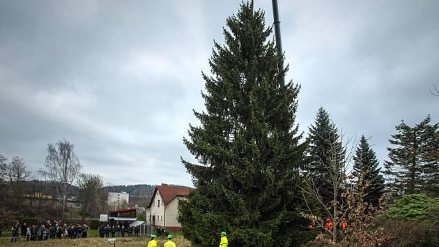 V Semilech 24. listopadu 2019 dopoledne pokáceli vánoční strom pro Prahu. Na Staroměstské náměstí dorazí smrk v noci na úterý. Šestapadesátiletý smrk ztepilý vyrostl na soukromém pozemku jen pár kroků od centra města.