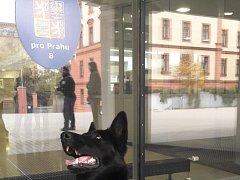 Žena ohlásila uložení bomby v Justičním paláci Na Míčánkách.