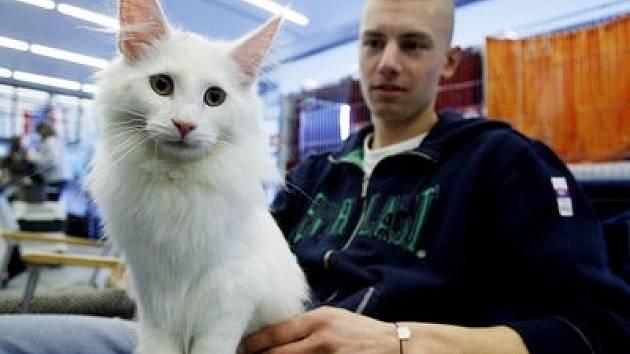Uhrančivý pohled do objektivu fotoaparátu je na výstavách pro kočky již rutinou.