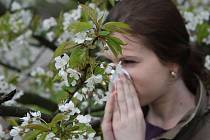 PYLOVÁ SEZÓNA. Výskyt nejrůznějších alergií je mezi lidmi stále častější.