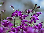 Z výstavy orchidejí ve skleníku Fata Morgana v pražské botanické zahradě.