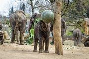 Slon Max oslavil v Zoo Praha třetí narozeniny.
