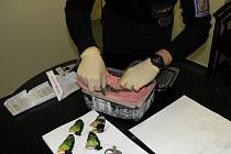 Středočeští celníci odhalili nelegální zásilku motýlů a ještěrů.