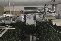 Pachatelé pěstovali kilogramy marihuany