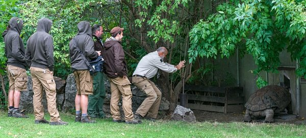 Připravený tým silných chovatelů včele skurátorem Petrem Velenským sledoval, jak želvák Eberhard mizí do svého domova vpavilonu. Ještě poslední centimetry a už nehrozí, že by museli 230kilogramů vážícího samce odnést.