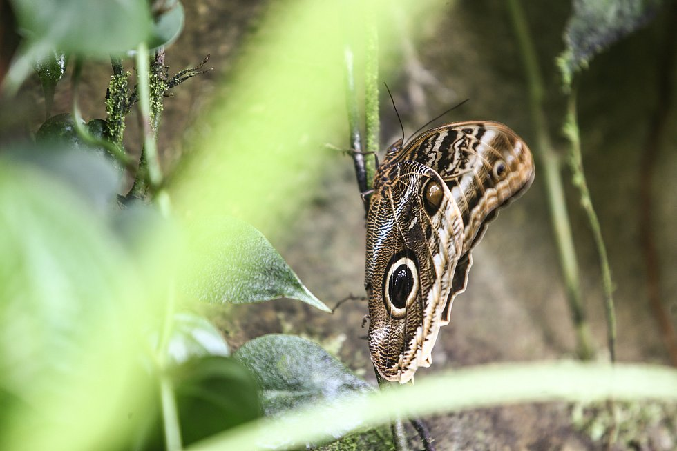Z vernisáže výstavy Motýli - Jedovatá krása ve středu 9. června.
