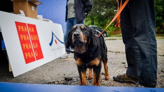 Magistrát bezplatně očkoval psy bezdomovců.
