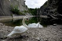 Podle místních obyvatel klesla hladina vody v Hlubočepském jezírku o třetinu, a tak se obávají, že jezírko vyschne úplně.