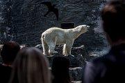 Tisíce lidí navštívili 6. července pražskou zoo. lední medvěd