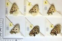 Zásilky chráněných motýlů, které byly zadrženy na celní poště v Praze 5.