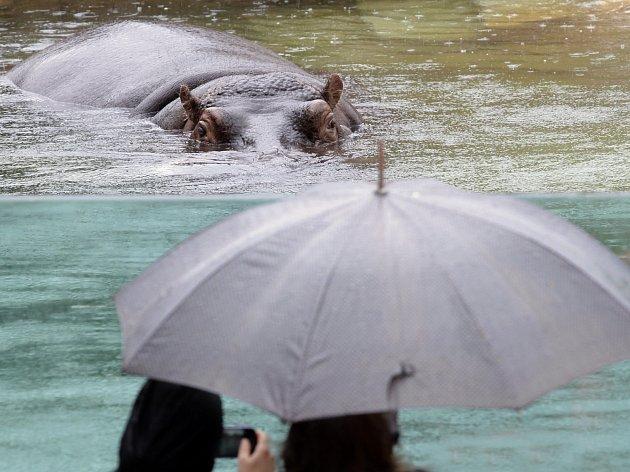 Pražská ZOO začala s evakuací zvířat
