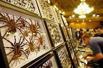 Dvoudenní mezinárodní setkání sběratelů hmyzu se konalo první březnový víkend v pražském Národním domě na náměstí Míru.