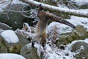 Zvířata v Zoo Praha si užívají sněhové nadílky.