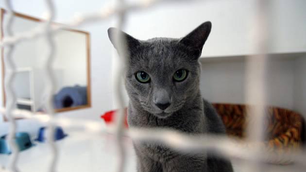 Mezinárodní výstava koček se koná ve dnech 14. a 15. února 2009 v Kongresovém centru Praha.