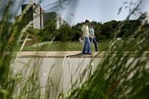 PRÉRIE NA SÍDLIŠTI. Přerostlá tráva působí problémy hlavně pražským alergikům.