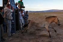 Dosud nejrychlejší transport převaláků do Mongolska