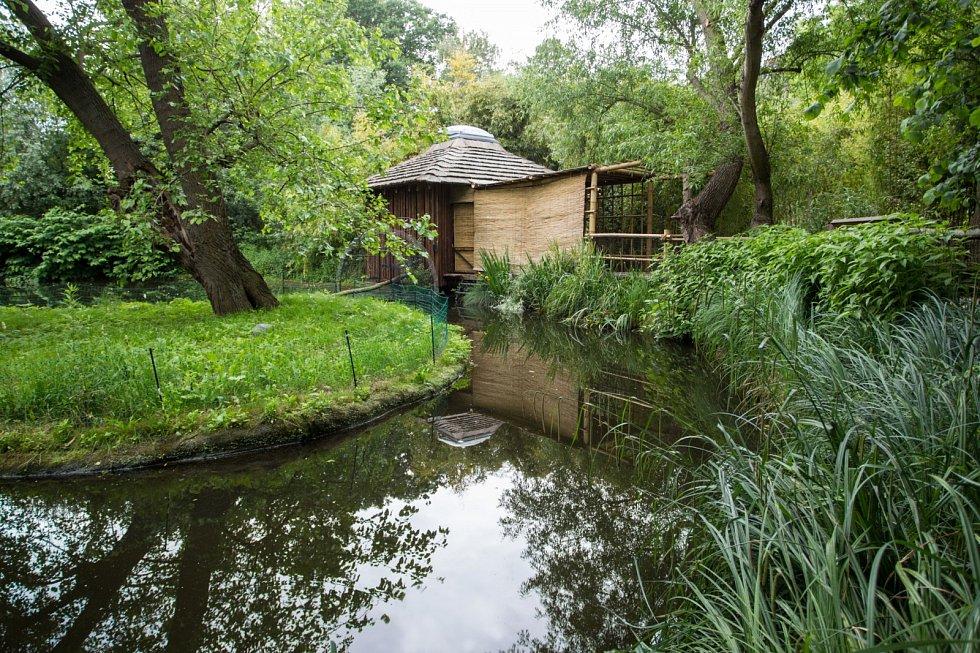 Nový pavilonek pro kotuly veverovité vznikl v expozičním celku Vodní svět a Opičí ostrovy v dolní části Zoo Praha.