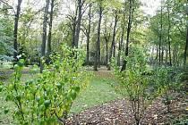 Na dosud nevyužívané části hřbitova v Ďáblicích, kde se nachází vzrostlý háj by se už brzy mohl otevřít takzvaný Les vzpomínek, neboli přírodní ekologický hřbitov. Pozůstalí dostanou možnost uložit zde popel svých blízkých přímo ke kořenům stromu.