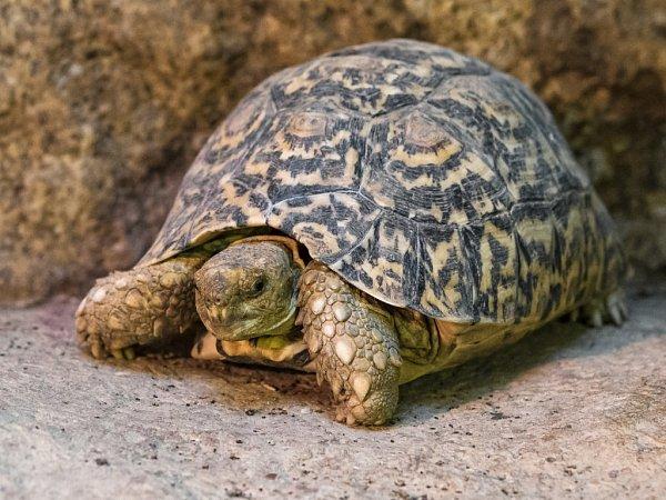 Víkend bude patřit plazům – především želvám. Návštěvníci se dozvědí novinky ze života těchto zajímavých zvířat ito, co je dnes ohrožuje.