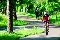 STROMY prý ohrožují cyklisty. Jsou odsouzeny k zániku.