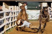 V areálu Říčních lázní v Praze - Radotíně se uskutečnilo 24. května 2008 Velké radotínské rodeo o Primátorský pohár. Snímek je z disciplíny zvané Steer Wrestling – Kácení telete