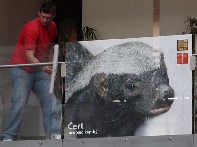 Nákupní galerii Atrium na Karlově náměstí oživila zvířata.