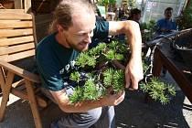 Celý den práce stálo úsilí pomoci stromu tak, aby rostl podle představ pěstitele Petra Ašenbrennera.