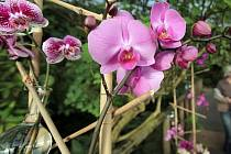 Orchideje v botanické zahradě.