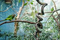 Čilý život papoušků v Rákosově pavilonu v Zoo Praha: úpravy vegetace, hnízdní aktivity i snůšky
