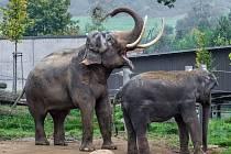 Příchod samce Ankhora byl však pro Mekonga impulsem ke změně v chování - o samice začal jevit nebývalý zájem.