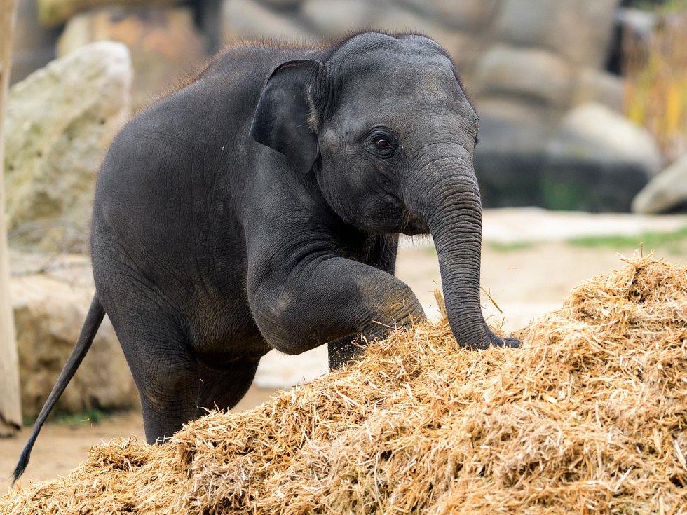 Smysly zvířat lze stimulovat různými způsoby. U slonů ktomu posloužila velká hromada štěpky. Drobné dřevěné kousky jsou pro slony příjemné na došlap, voní jim, mohou se jimi pohazovat, konzumují je anebo vkupce hledají ukryté pamlsky.