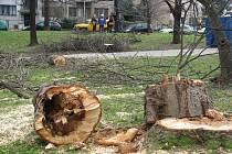 Park Jezerka v Praze 4. Pokáceno mělo být až 60 stromů, inspektoři to zpochybňují.