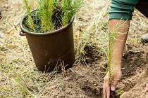 Pražští lesníci vysadili v loňském roce 403 tisíc lesních sazenic.