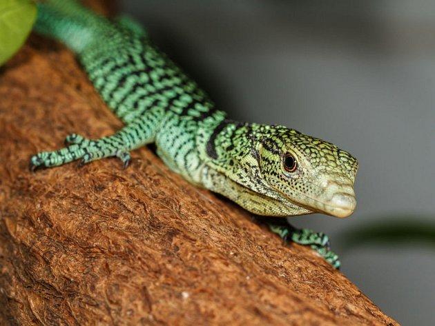 Inteligentní pohled očí nezapře predátora, byť predátora hmyzu.