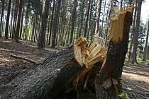 Na řádění orkánu doplatilo v Kunratickém lese přibližně tisíc stromů.