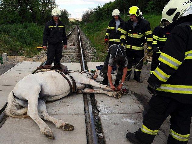 Kůň uvízl na železničním přejzdu
